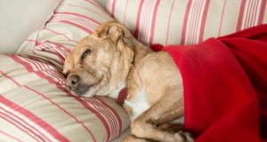 common dog diseases