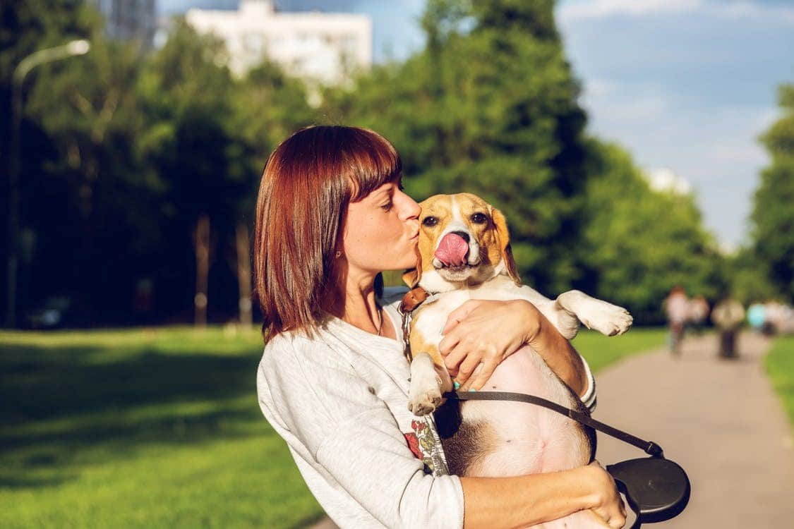 dog-friendly places in Northeastern USA