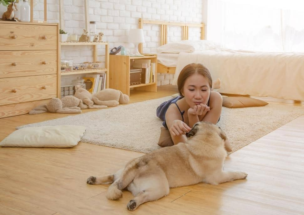simple ways to keep your dog busy