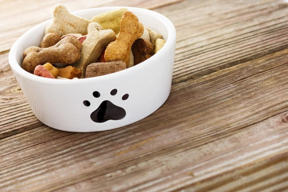 3 Harmful Ingredients That Shouldn't Be Present in Dog Food